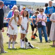 Dog show entrants