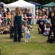 Dog show ring