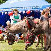 Donkey rides