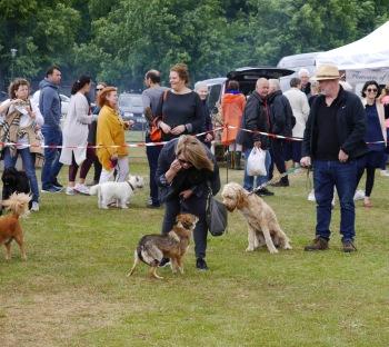 Dog Show Ham Fair 2019